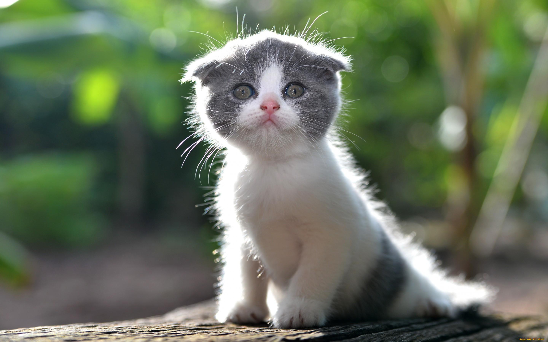 животные, коты, малыш, лапочка, котёнок